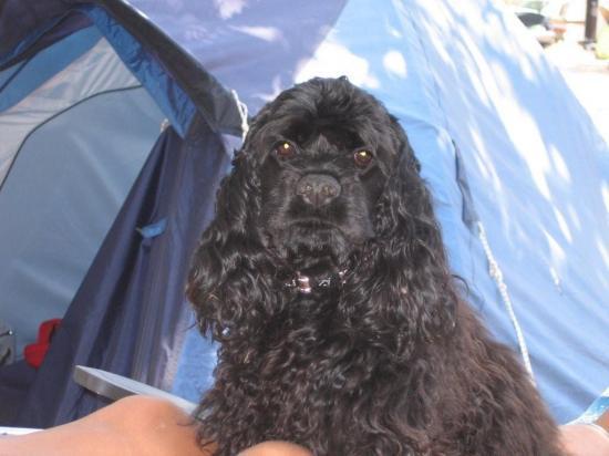Casper en vacances 2008