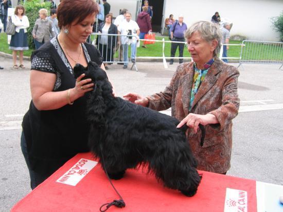 Casper lors de l'expo régionale du spaniel club juin 2010