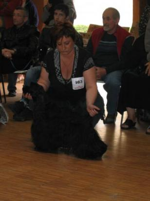 Casper, régionale spaniel club juin 2010