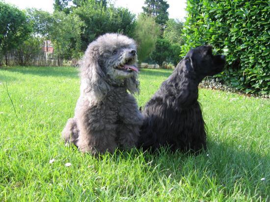 Kevin et casper, juin 2010
